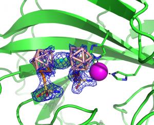 Obr. 1 Struktura metallakarboranového inhibitoru CB-31, který je vázán v aktivním místě enzymu CA-29 (CA-IX mimic). Stanovení struktury: J. Brynda, P. Řezáčová, ÚMG AV ČR, ÚOChB, AV ČR.